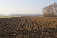 Landscape with field. On spring morning Stock Photography