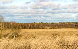 Landscape with field stock photo