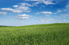 Landscape a field of a cloud Royalty Free Stock Photography