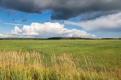 Landscape field and clouds summer Royalty Free Stock Image