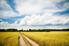 Landscape with Field and Empty Countryside Road Royalty Free Stock Photo
