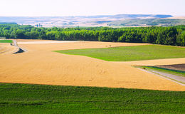 Landscape with  field. In Europe at sunny summer day Stock Photo