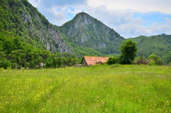 Landscape with field of flowers, trail and mountains to the Huda lui Papara cave, Romania Stock Photos