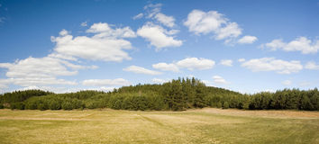 Landscape of field and forest Royalty Free Stock Images