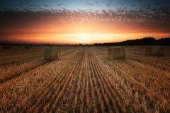 Summer field at sunset. Landscape with a field full of hay bales at sunset royalty free stock photo