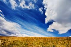 Landscape field of green fresh grass under blue sky Stock Photos