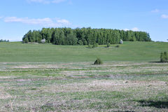 Landscape field with green grass and forest Stock Images
