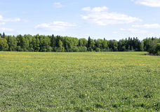 Landscape field with green grass and forest in the distance Royalty Free Stock Image