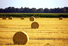 Landscape of field after harvest with bales royalty free stock photo