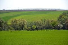 Landscape with a field of hop plants Royalty Free Stock Images