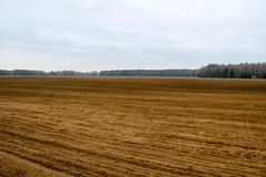 Landscape field, land for plowing with crops on the background of the forest stock image