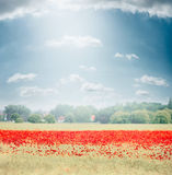Landscape with field of poppies blooming , countryside in the background and beautiful sky. Outdoor nature Stock Images