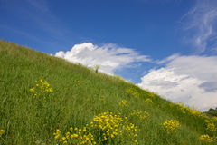 Landscape of a field and sky. Landscape of a field with flowers and blue clear sky. Panorama of wild summer herbs. A large sky on a summer day Royalty Free Stock Photography