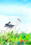 Landscape with field and stork. Summer image. Watercolor hand drawn illustration Stock Photography