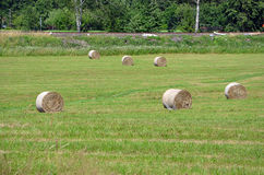 Landscape with field and straw bales Royalty Free Stock Image