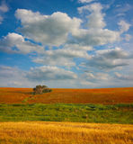 Landscape with  field tree and clouds Royalty Free Stock Images
