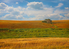 Landscape with  field tree and clouds Royalty Free Stock Photography