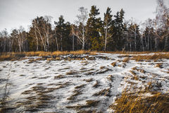 Landscape of field under the snow Royalty Free Stock Photos