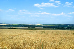 Landscape with a field of wheat Royalty Free Stock Photo