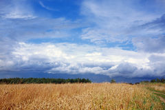 Landscape with field of wheat Stock Images