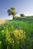 Landscape of field with wild flowers Royalty Free Stock Photos
