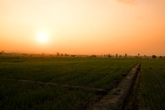 Landscape fields farm and sunlight in evening time Royalty Free Stock Image