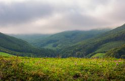 Landscape with fields and  forest on hillside. Lovely foggy and cloudy sunrise in mountains Royalty Free Stock Images