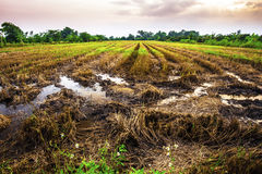 Landscape of fields harvested at evening time Royalty Free Stock Images