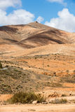 Landscape of fields and mountains near Antigua village, Fuerteventura, Royalty Free Stock Images