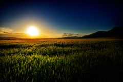 Landscape with fields in summer at sunset Royalty Free Stock Photos