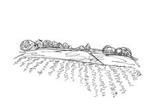Landscape with Fields. And trees. Hand drawn Vector Illustration Stock Photography