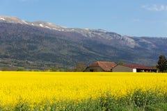 Landscape of fields Royalty Free Stock Image