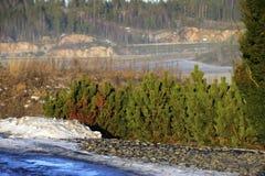 Landscape in Finland fog winter conifers Stock Photos