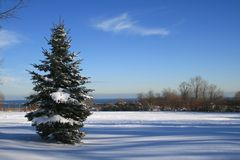 Landscape with Fir-tree Stock Photography