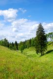 Landscape with a fir-tree. A view of summer lanscape with a fir-tree at blue sky background Stock Photo