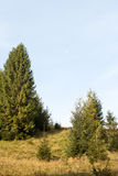 Landscape with a fir-tree Royalty Free Stock Photos