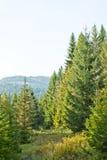 Landscape with a fir-tree Stock Photos