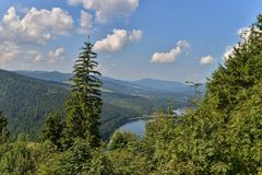 Landscape, among fir trees, with the belis lake. Stock Photography