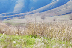 Landscape with the first green grass Royalty Free Stock Images