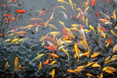 The Landscape fish Royalty Free Stock Images