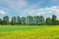 landscape fjädern Royaltyfri Foto