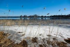 landscape fjädervatten Royaltyfria Bilder