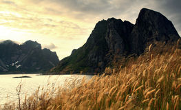 Landscape of the fjord Royalty Free Stock Images