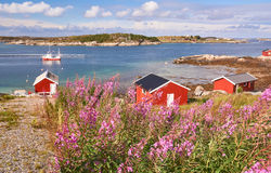Landscape with fjord, rorbru and glade with blooming fireweed Royalty Free Stock Images