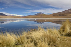 Landscape with flamingos in South Bolivia Royalty Free Stock Photo