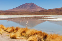 Landscape of flamingos and volcanoes in the Hedionda stinking lake lagoon, Bolivia Stock Photos