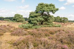 Landscape with flews. Stock Photos