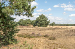 Landscape with flews. Stock Photo