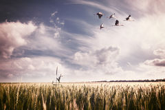 Landscape with a flock of storks Royalty Free Stock Photos
