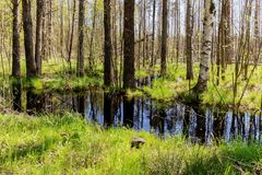 Landscape with a flood. In the spring forest stock photos